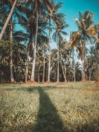 bird'seye view photography of coconut trees