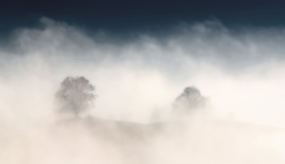 tree surrounded by fog