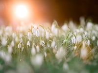 selective photography of white petaled flowers