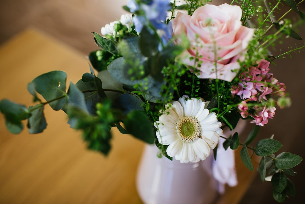 selective focus photo of pink and white Daisy flower in vase