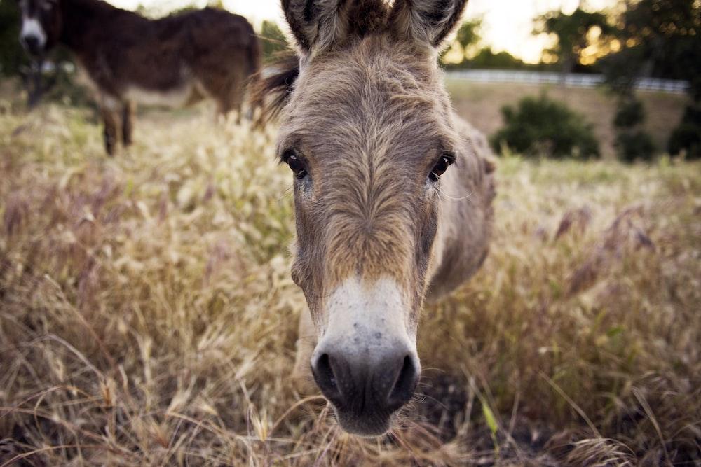 closeup photography of brown horse