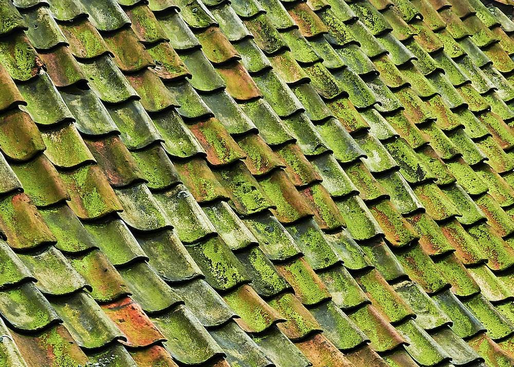 close-up photo of green shingle roof