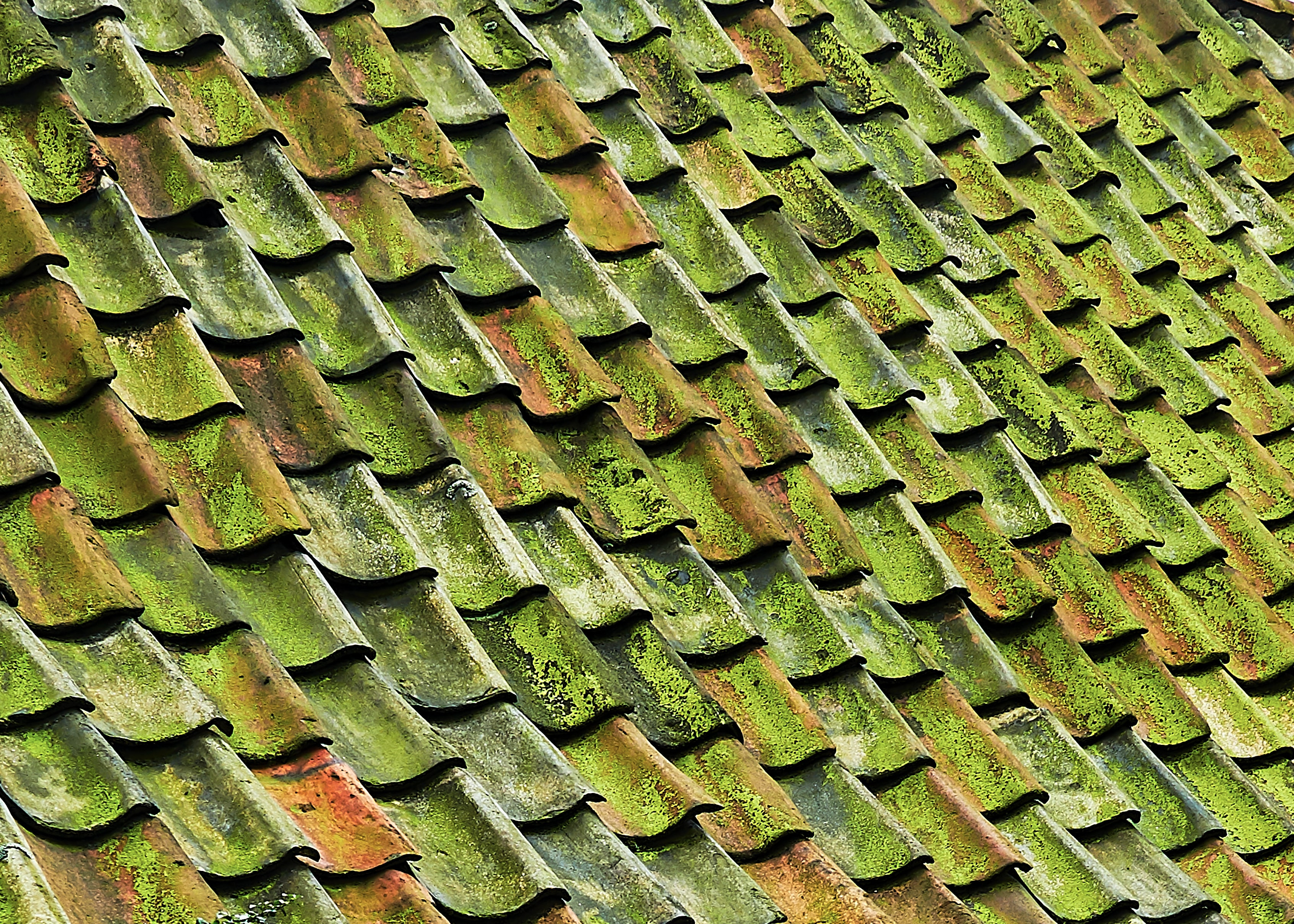 close-up photo of green shingle roof