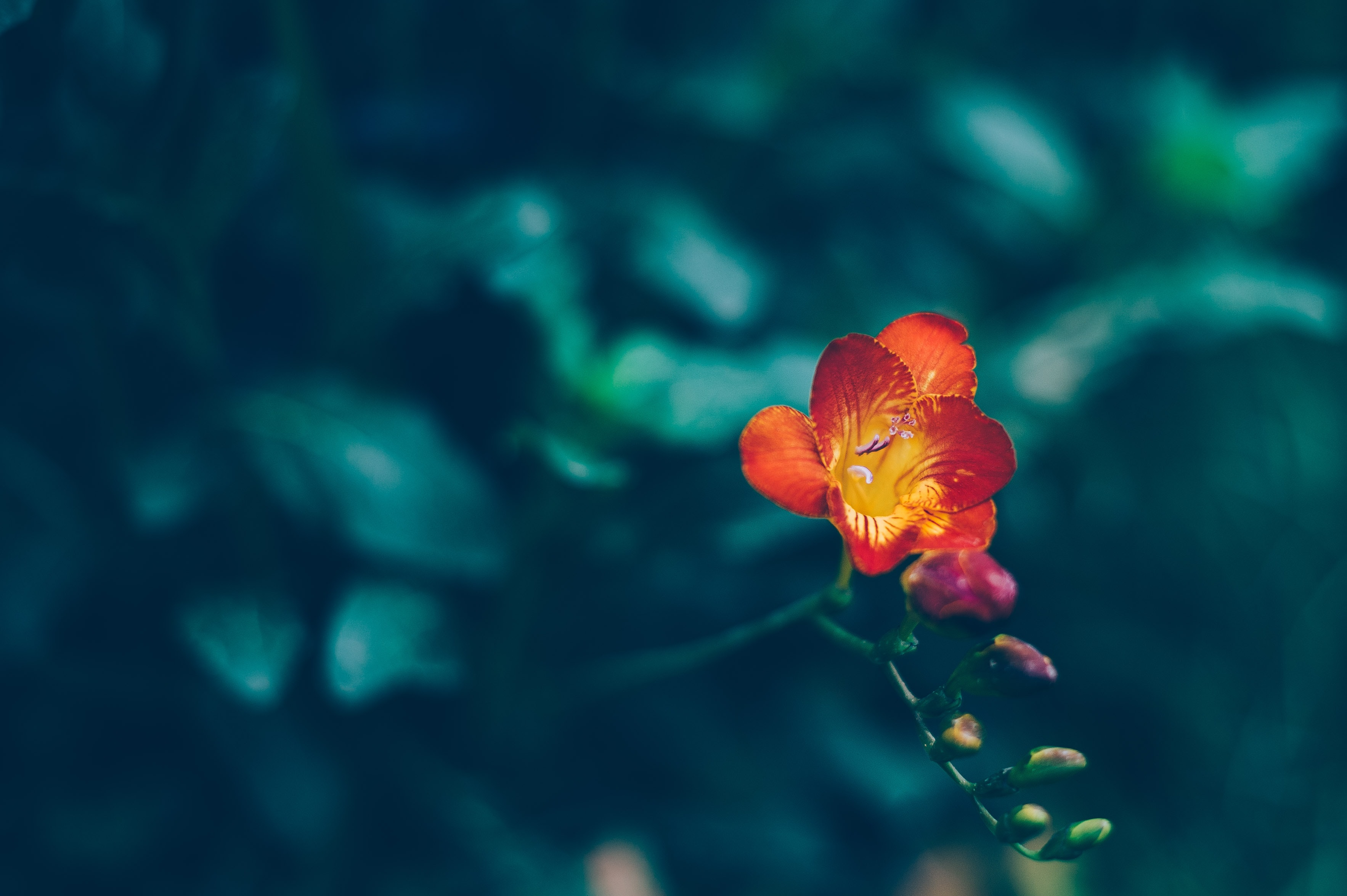 selective focus photography of orange flower
