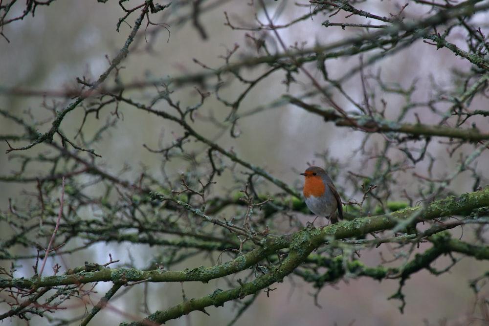 black and orange bird standing on tree branch