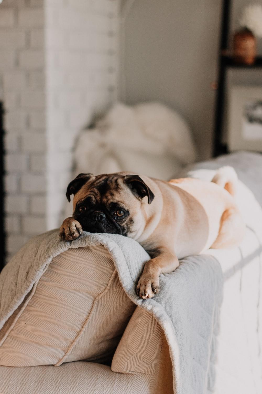 dog pictures download free images on unsplash. Black Bedroom Furniture Sets. Home Design Ideas