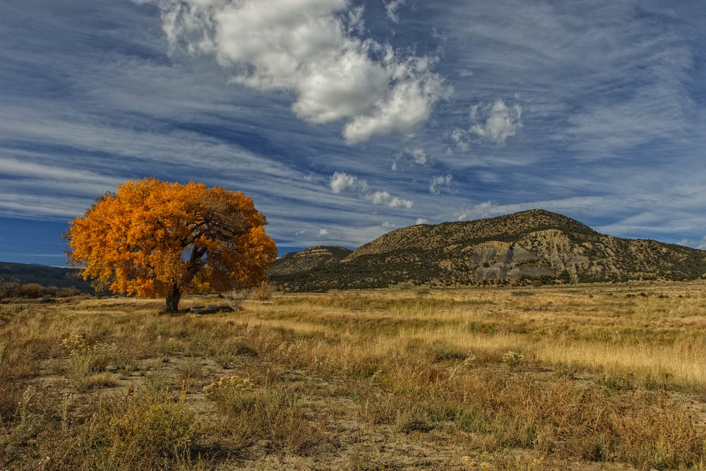 orange tree near mountain under white clouds and blue sky