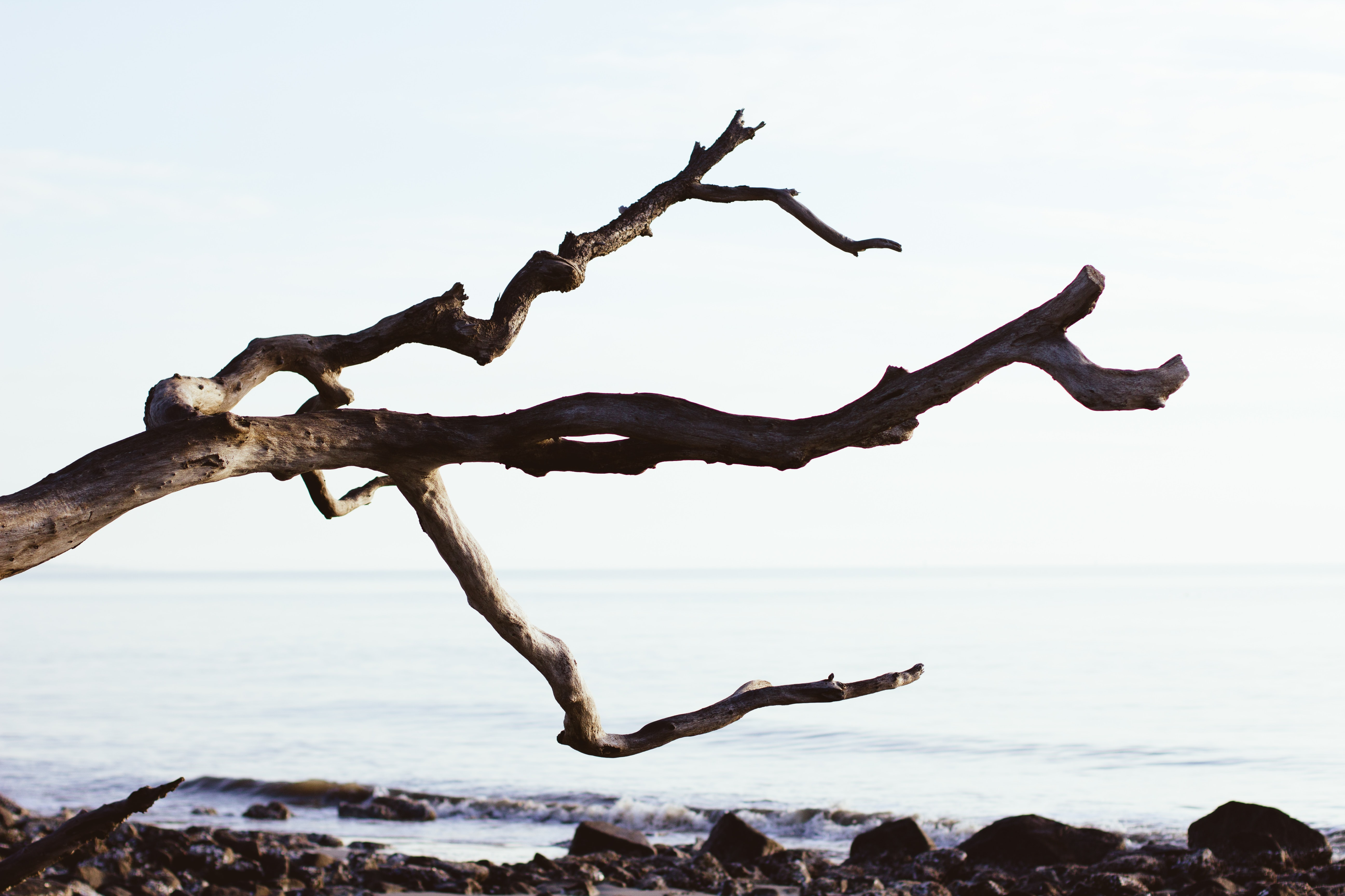 close up photography of driftwood near sea