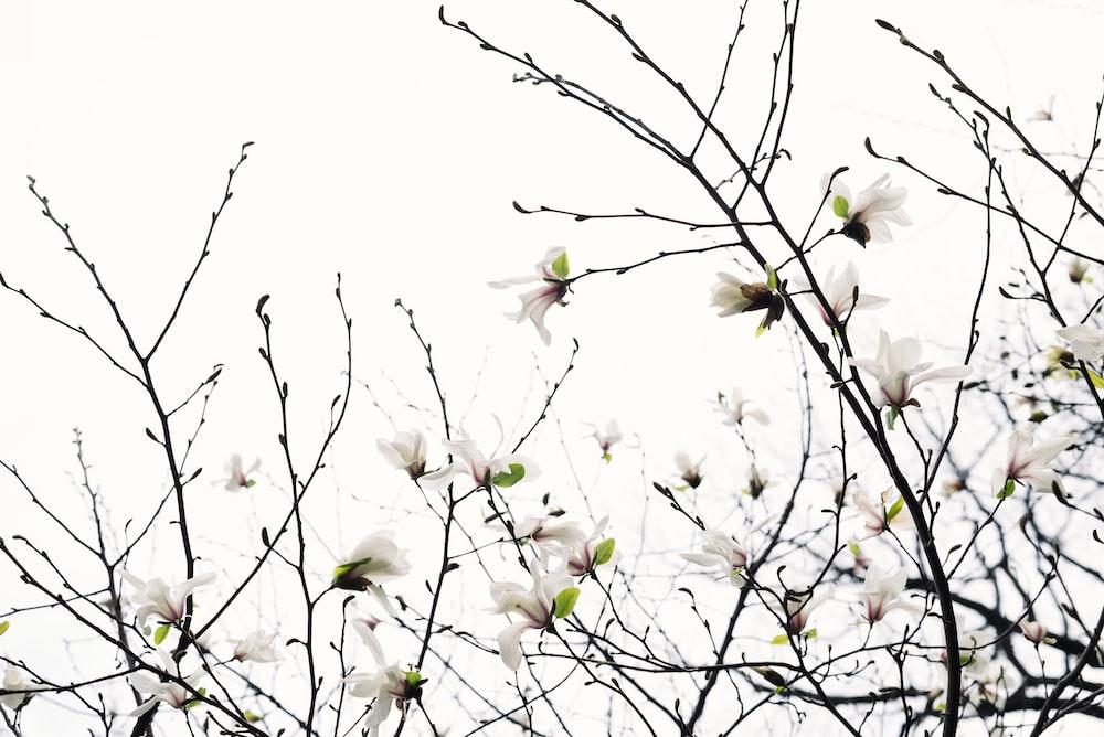 white petaled flowers in bloom