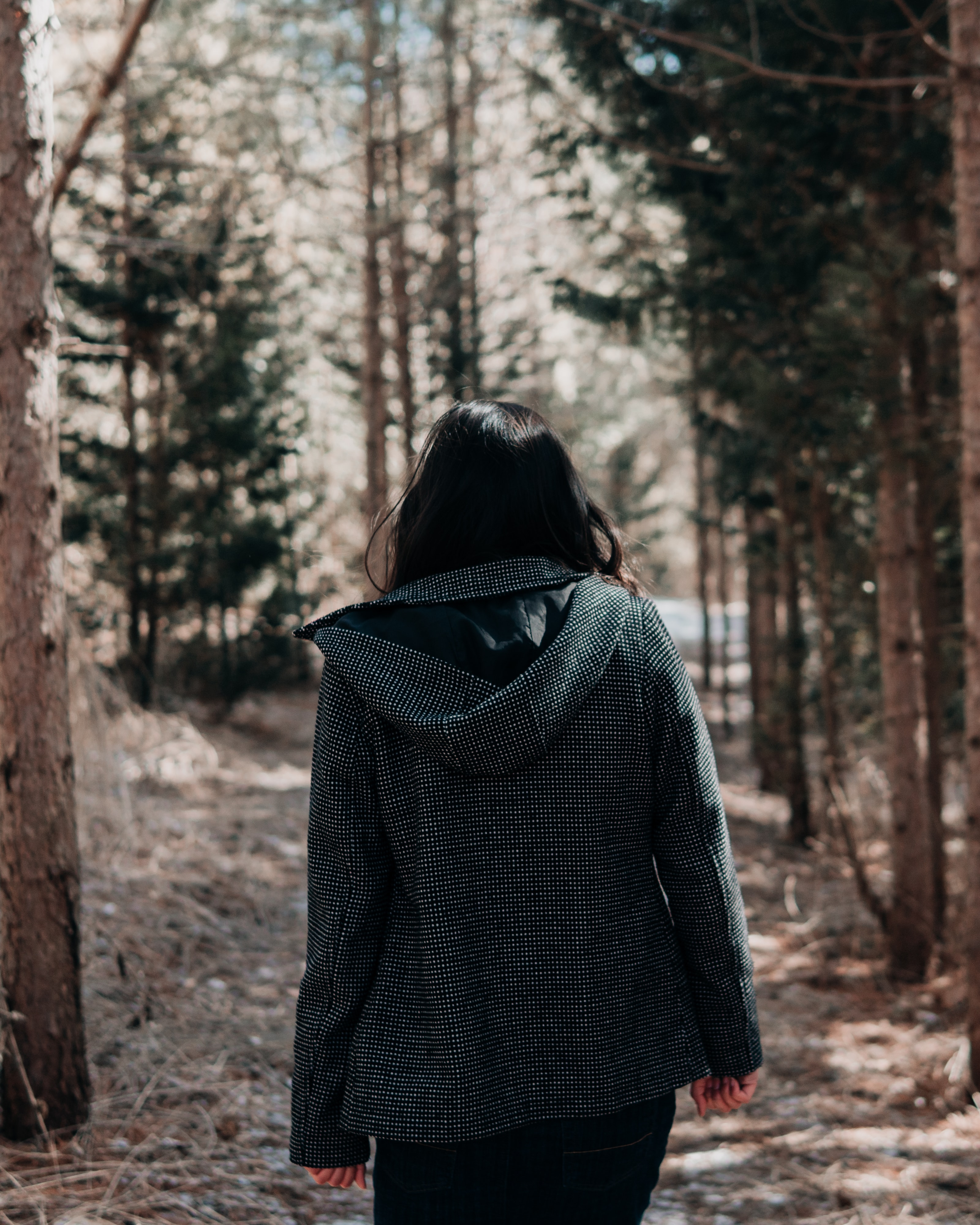 person walking on forest with pine trees