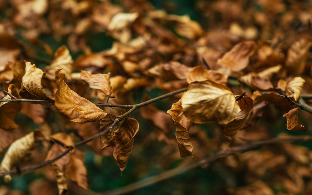 shallow focus photography of dried leaves