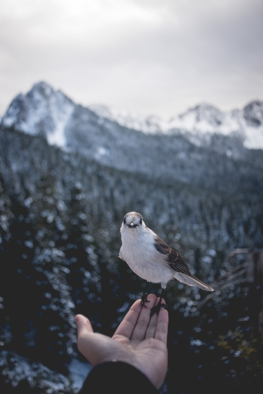 person holding grey bird