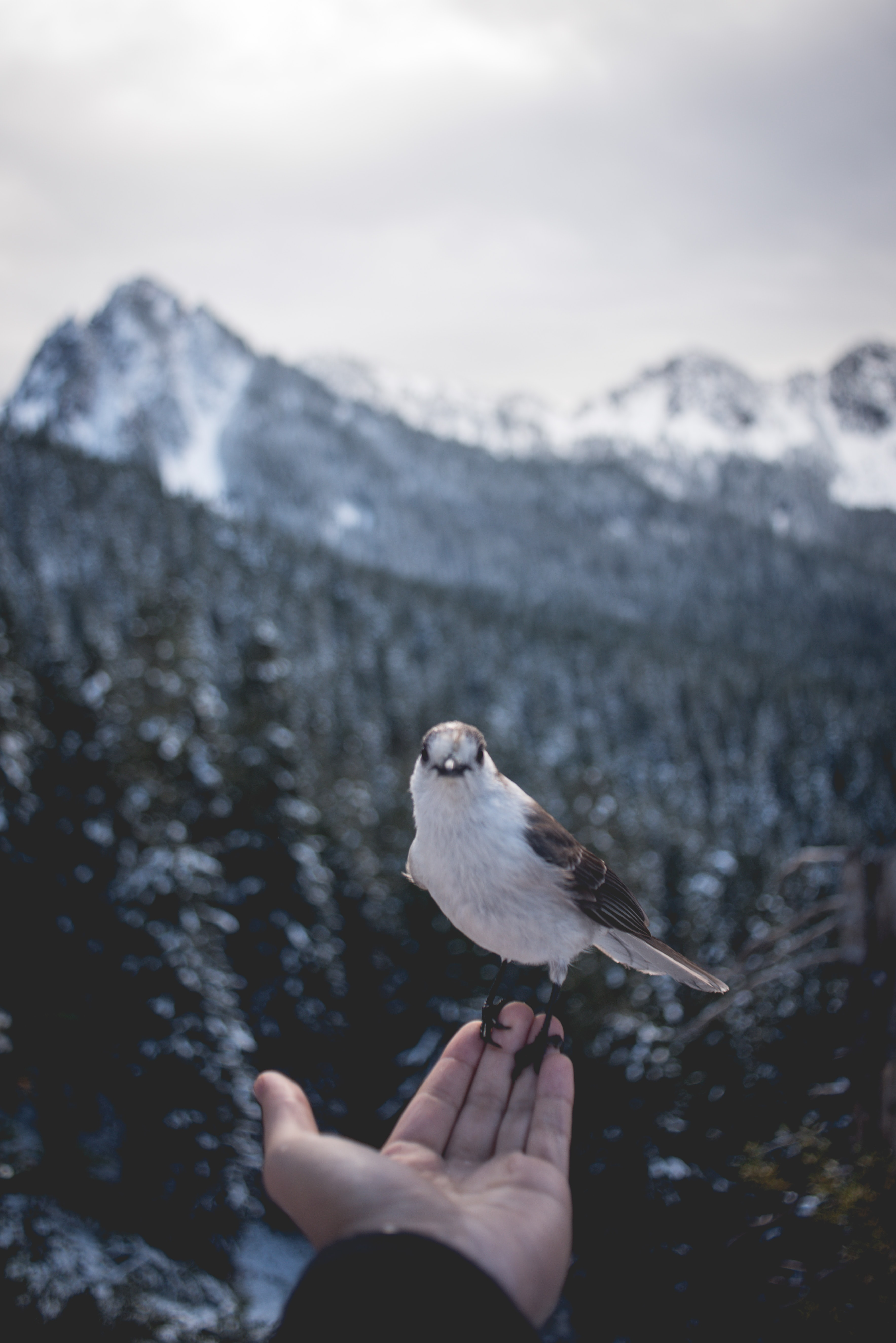person holding grey bird