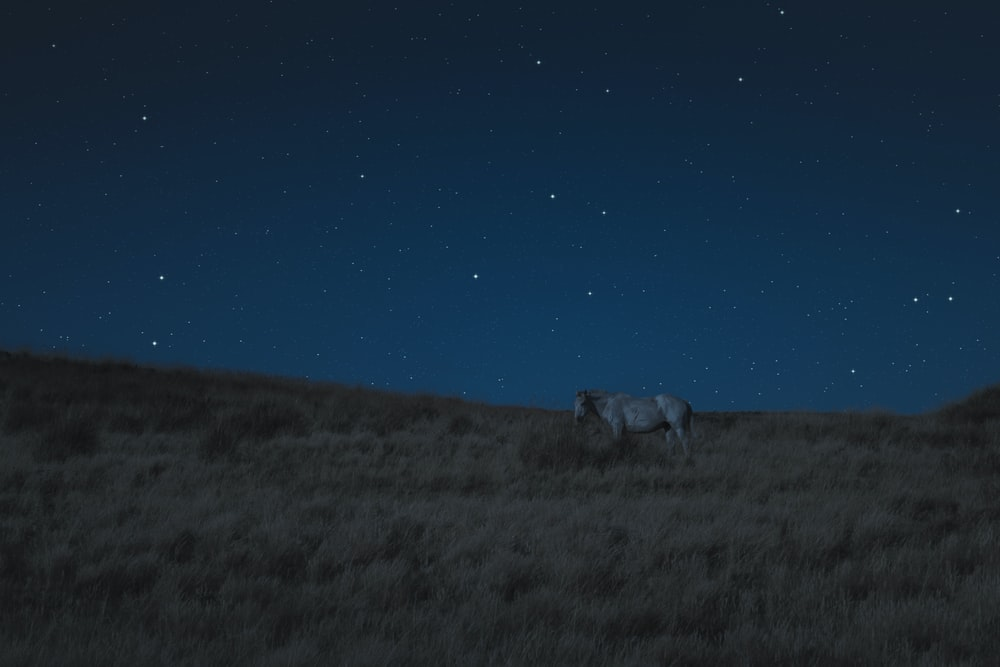 white horse on brown grass during nighttime