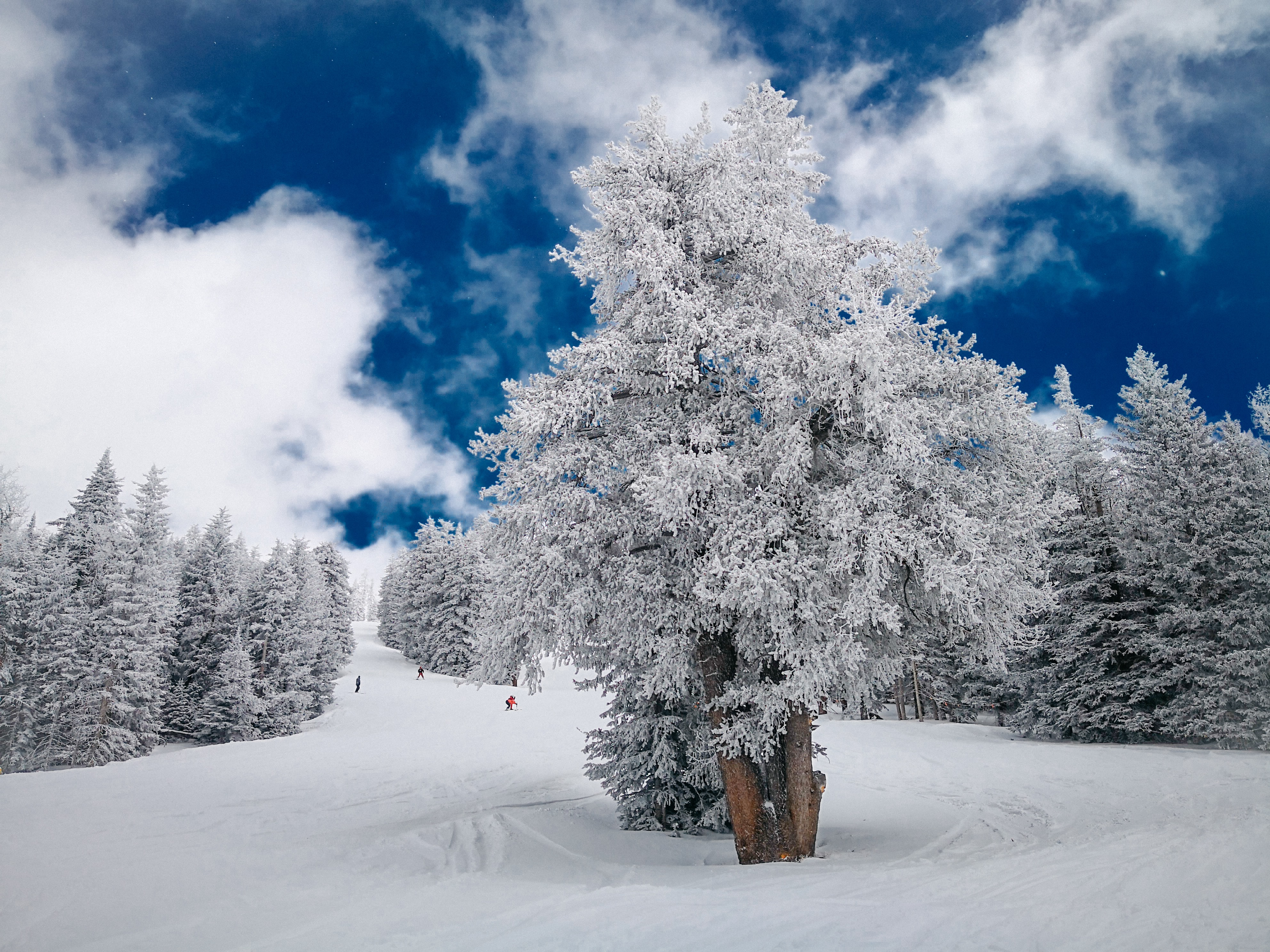 photography of snow plain with trees and clouds
