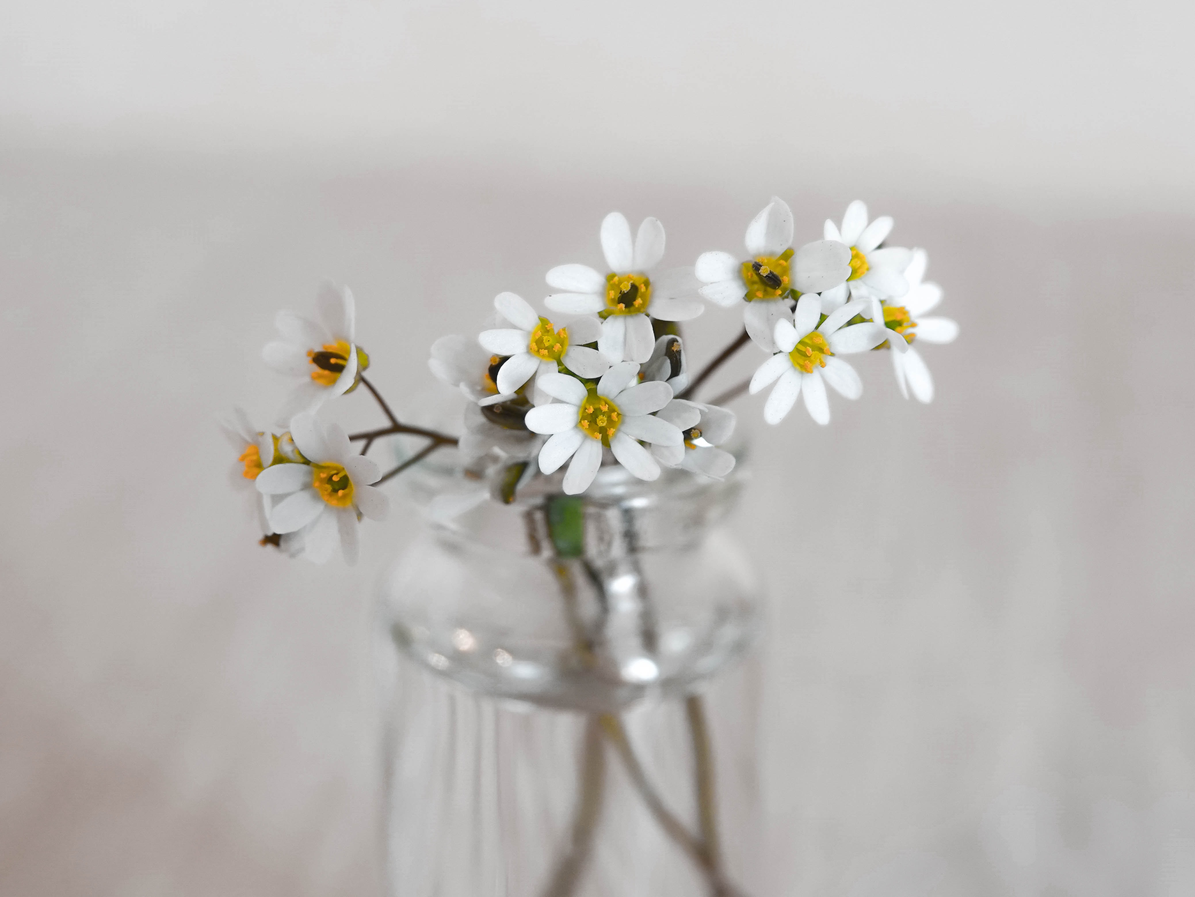 selective focus photography of white flowers in clear glass jar
