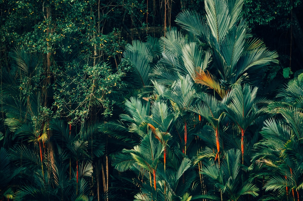 Tropical Wallpapers Free Hd Download 500 Hq Unsplash