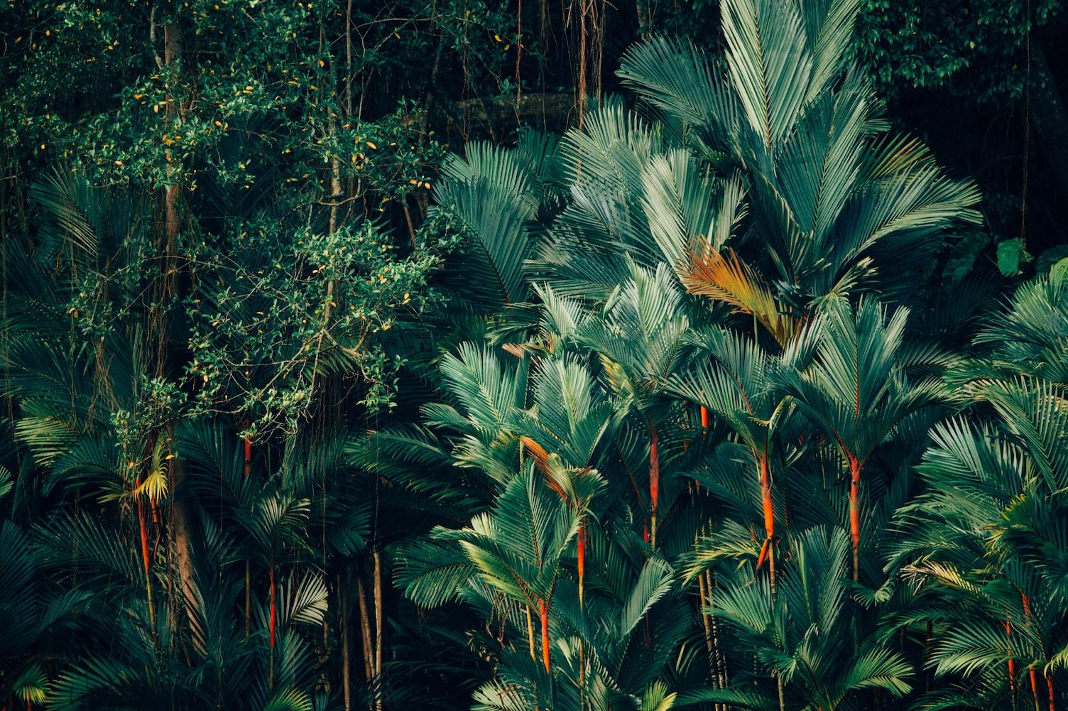 différence survie bushcraft survivalisme