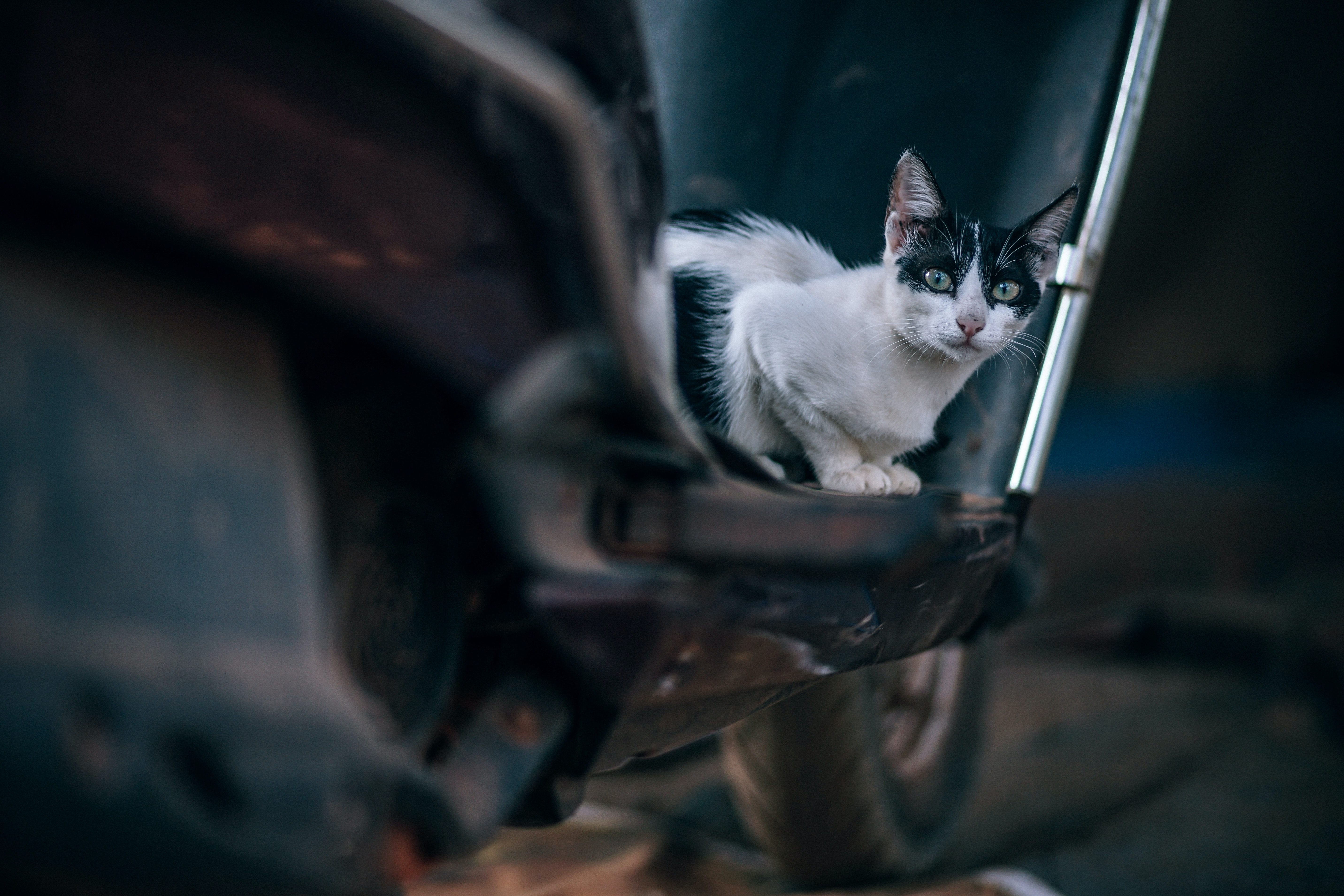 selective focus photography of black and white cat sitting on motor scooter