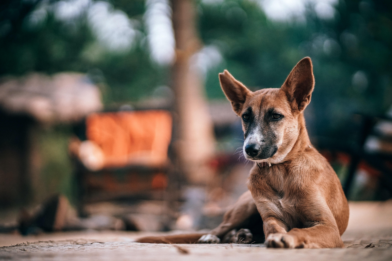 short-coated brown dog sitting on gray soil