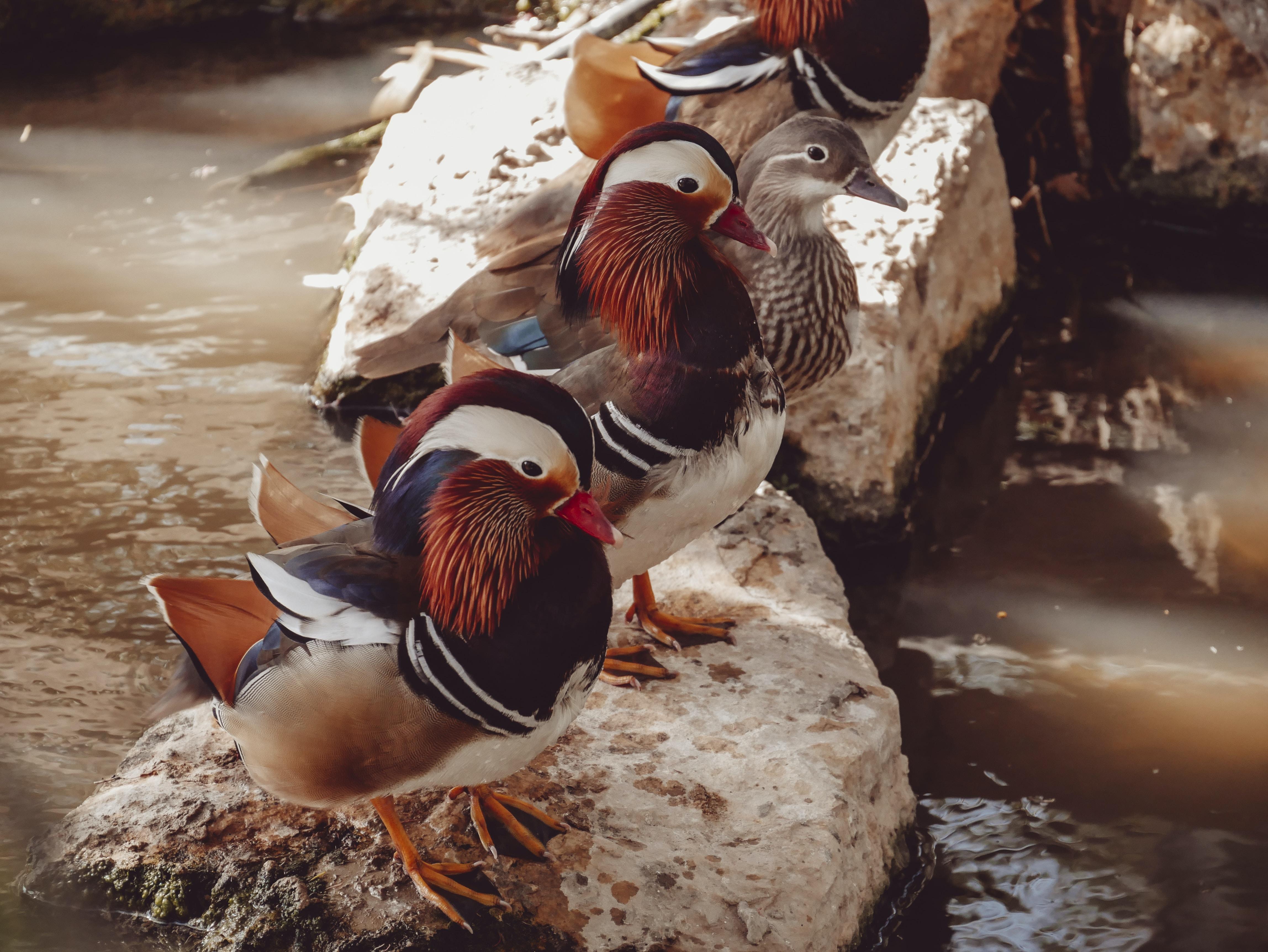 three brown birds on white stone