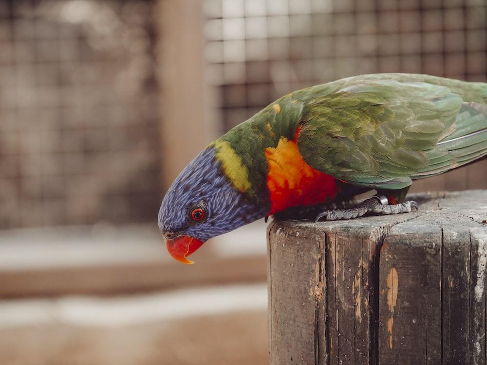 blue, green, and orange bird perching on tree stump