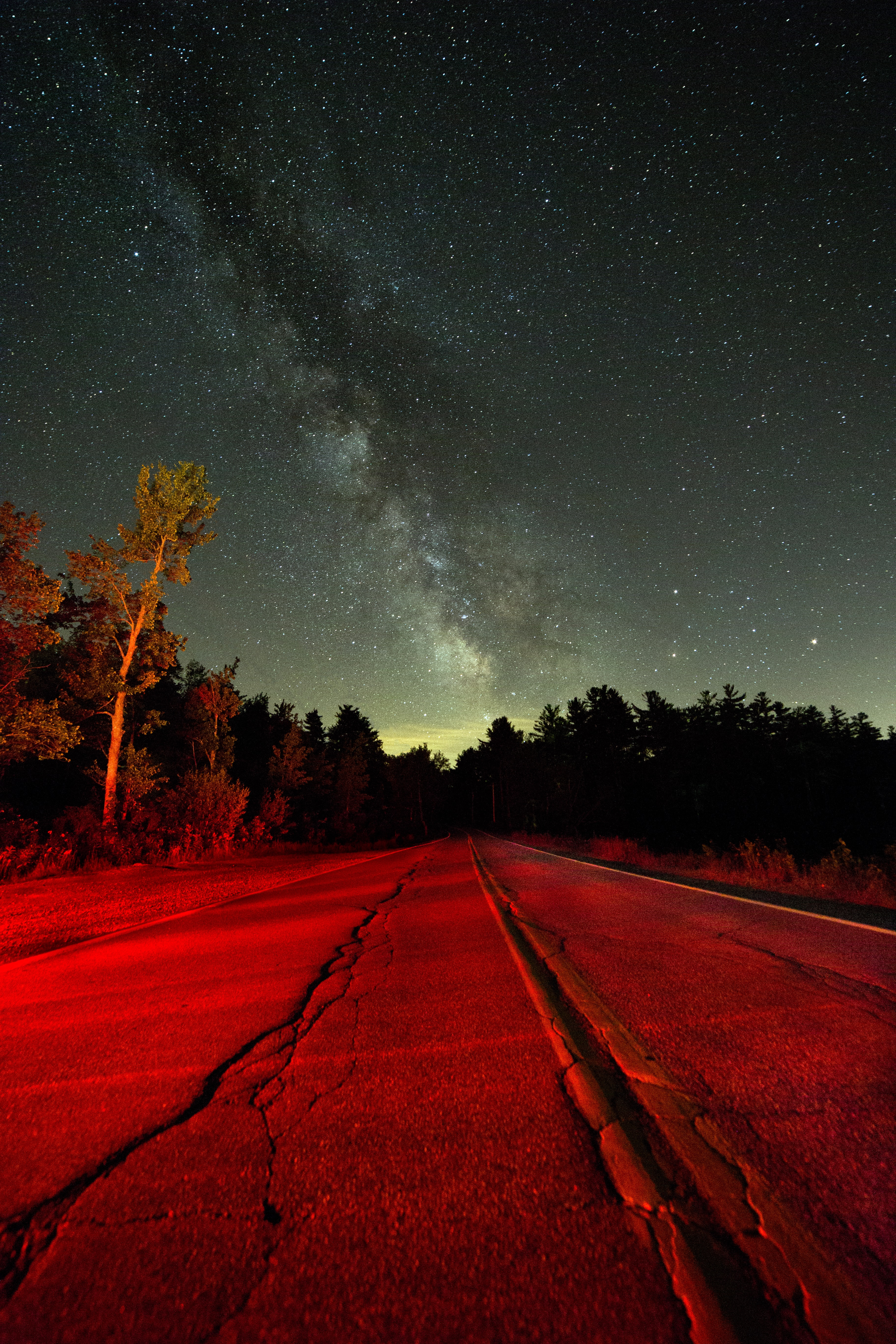 grey concrete straight road near tall trees under white stars at nighttime