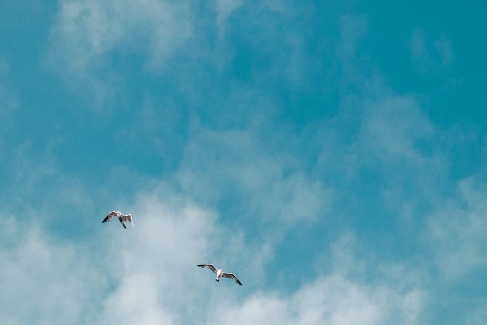 two albatross bird flying on mid air taken at daytime