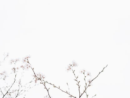 White Wallpapers Free Hd Download 500 Hq Unsplash