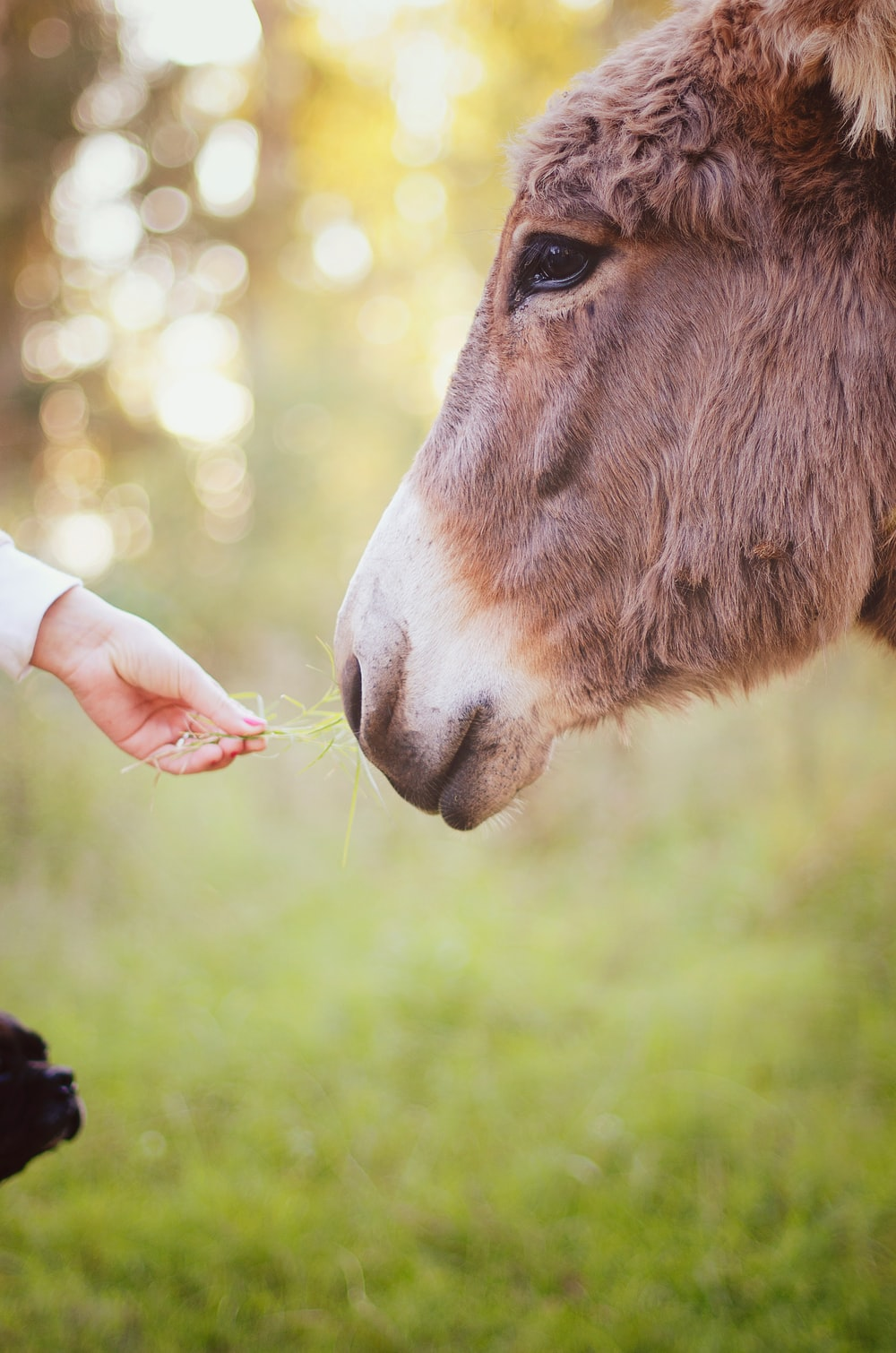person holding green grass feeding brown animal