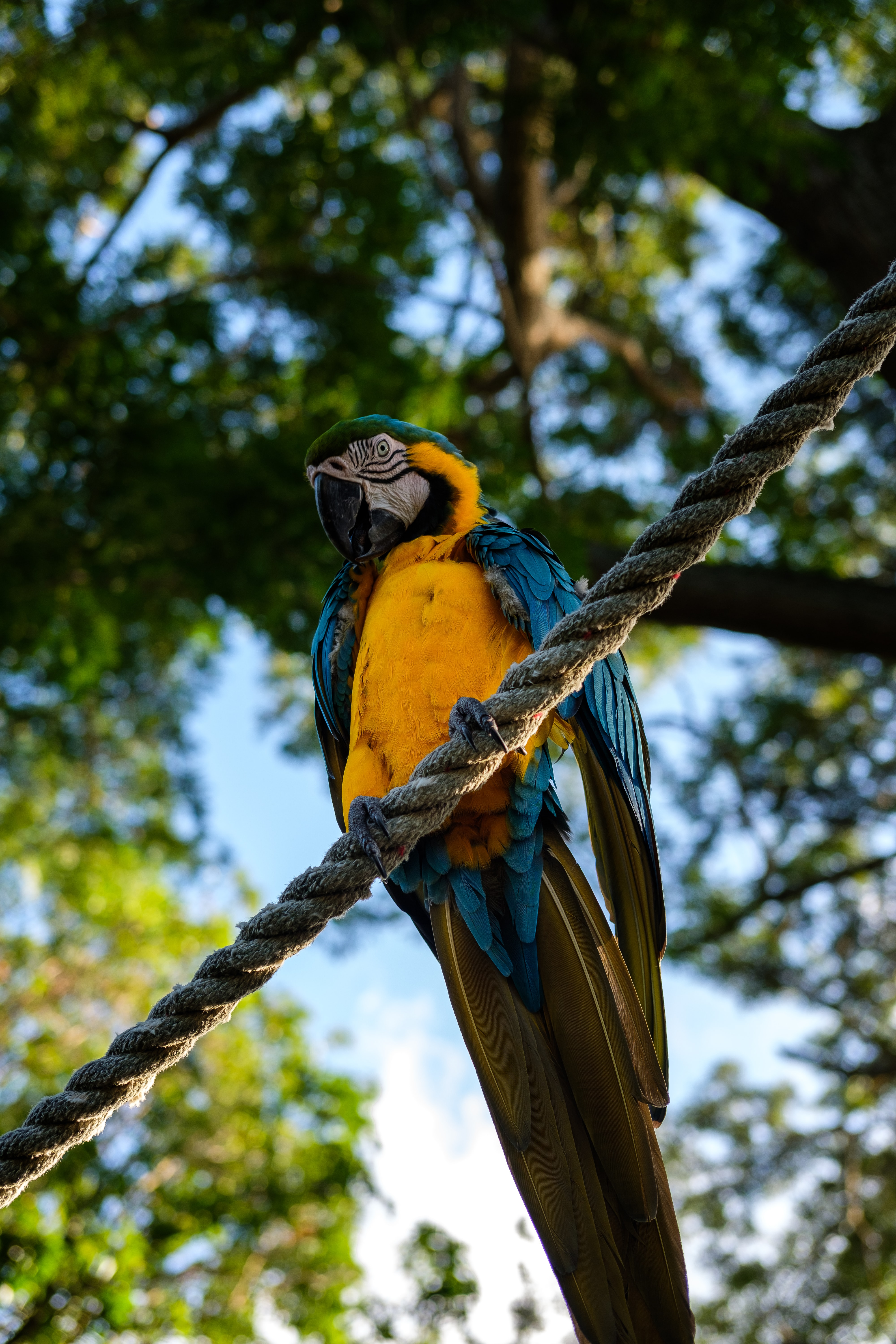 yellow and blue parrot perching on brown rope