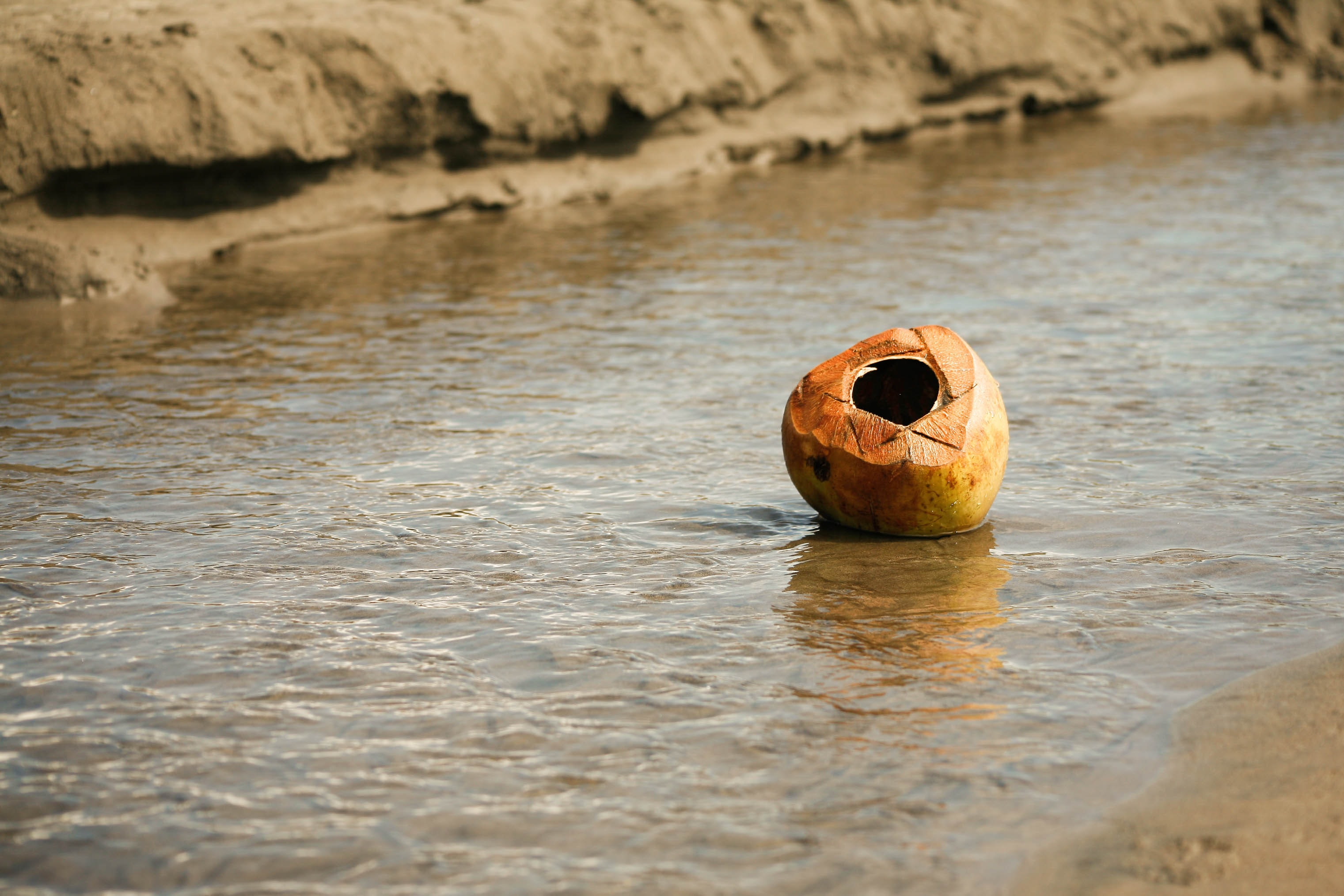 coconut floating on river during daytime