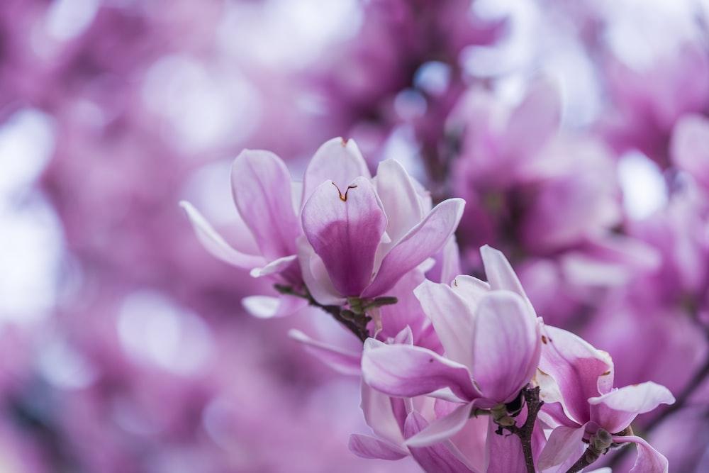 macro shot of purple orchids
