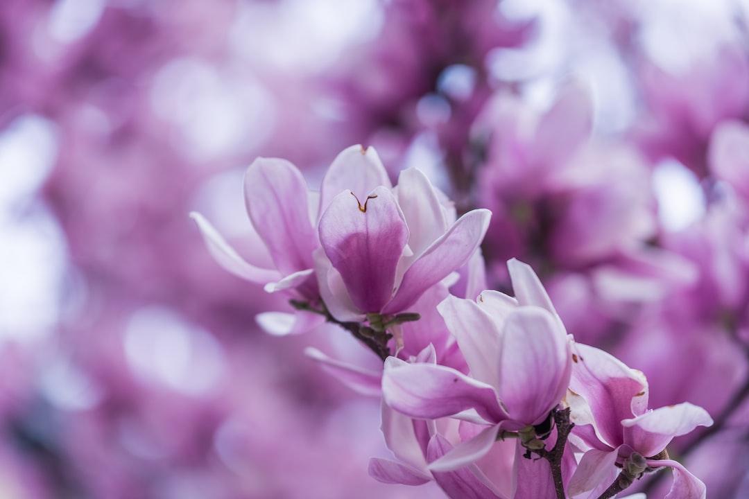 4786. Virágok