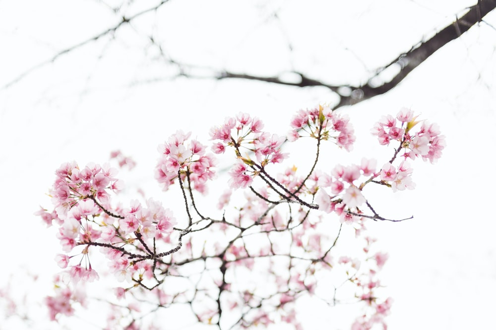 pink flowers in tilt shift photography
