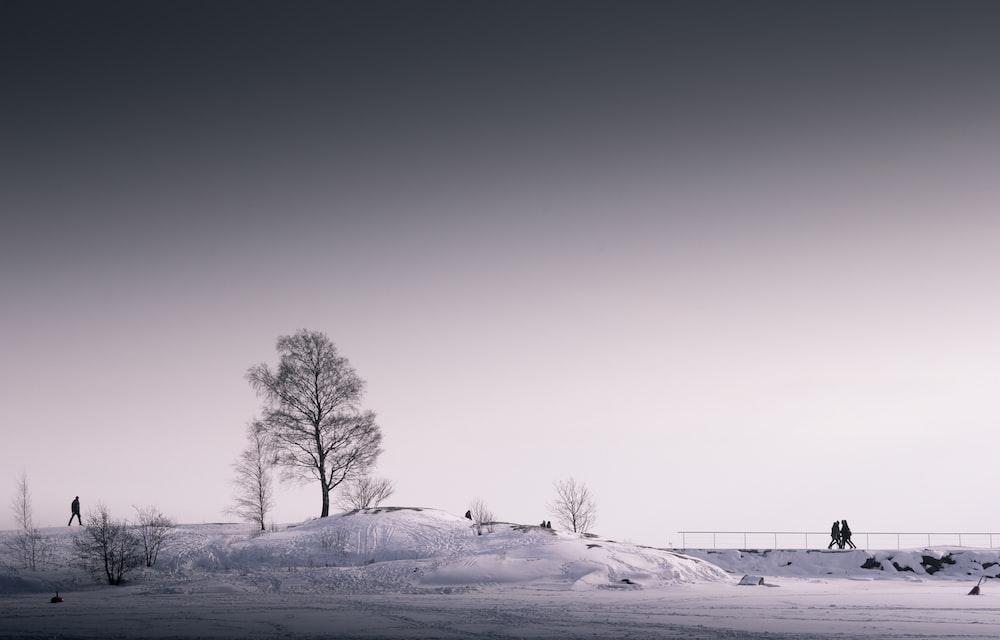 tree under gray sky