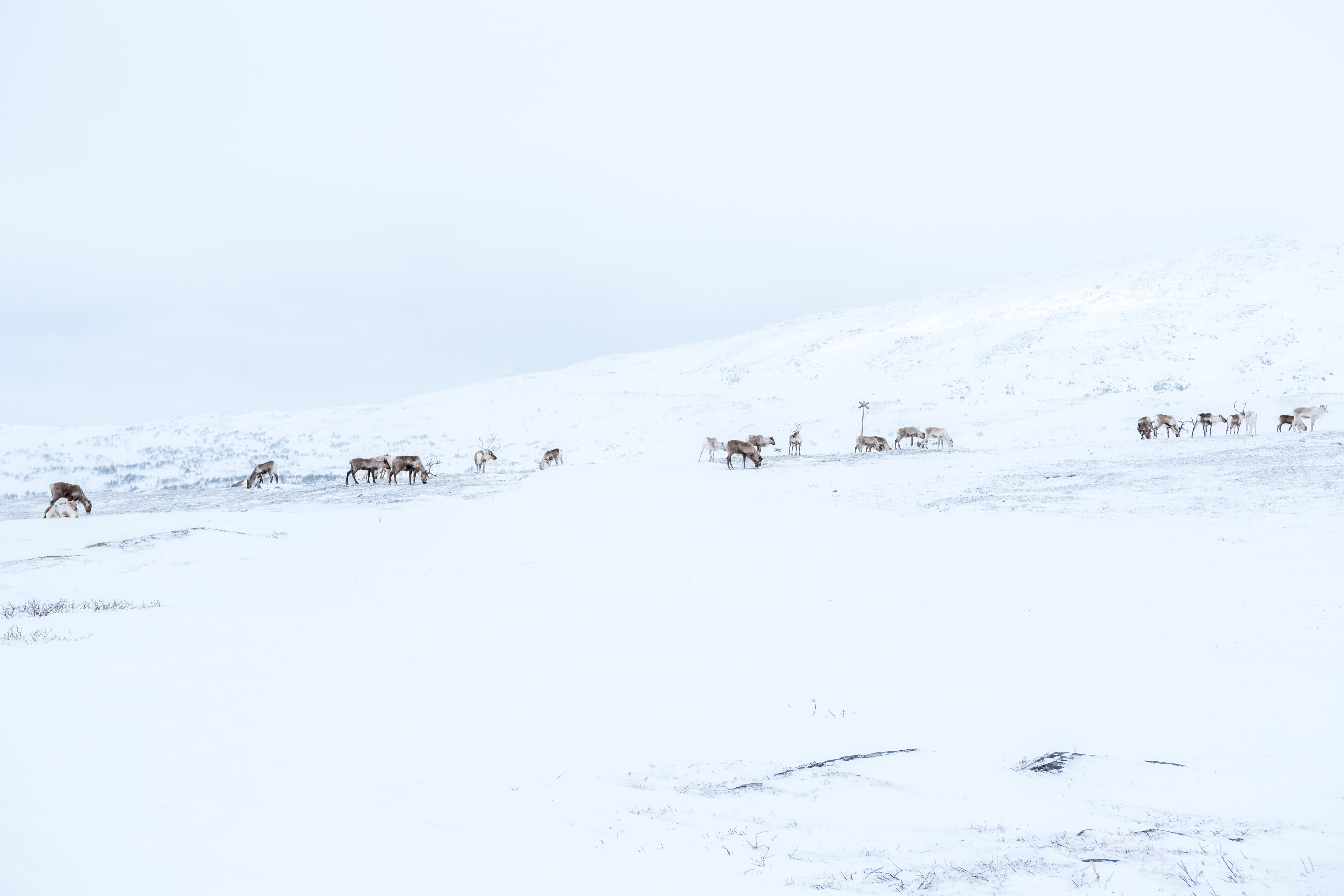 snow field with animals roaming