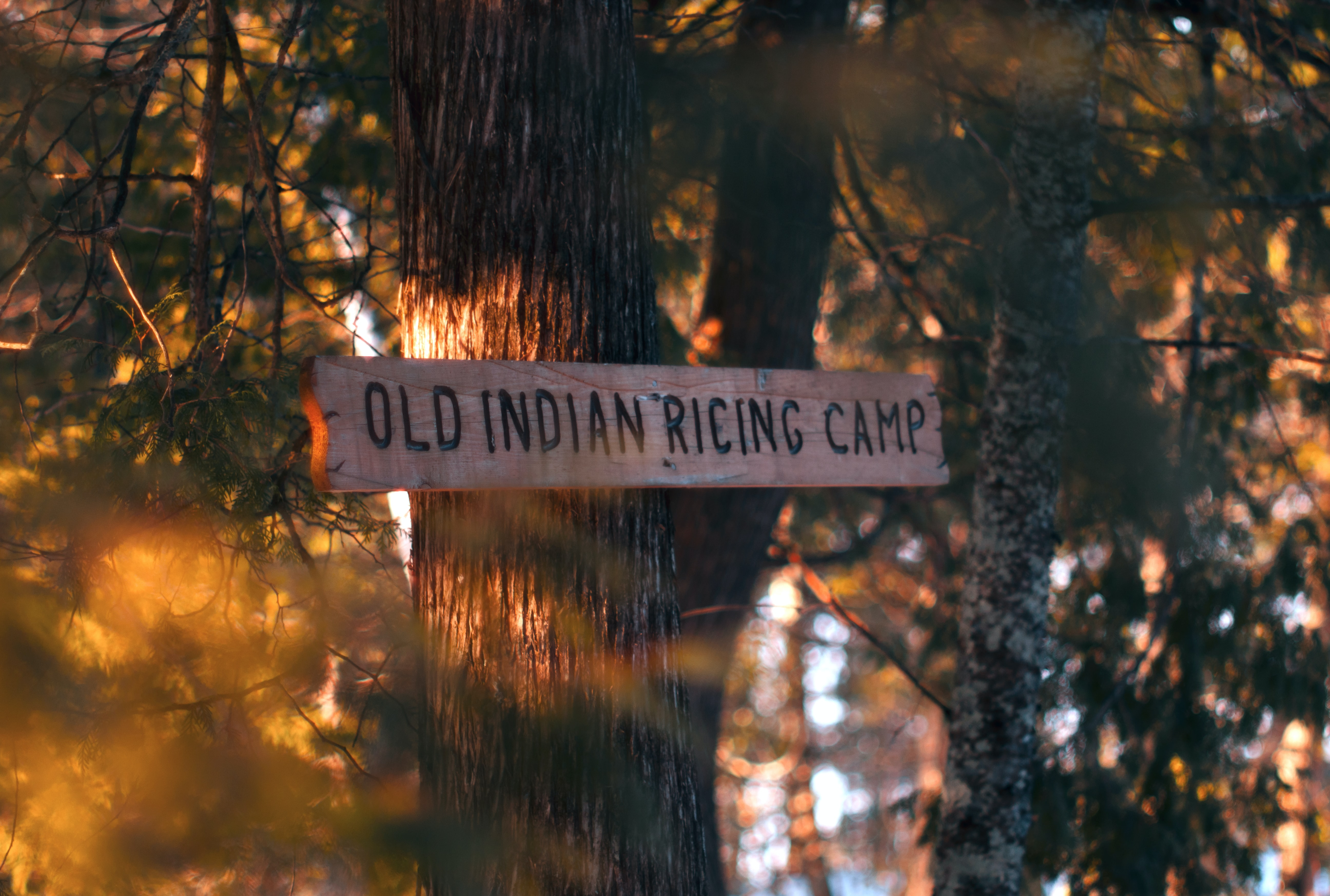Old Indian Ricing Camp signage on gray tree trunk