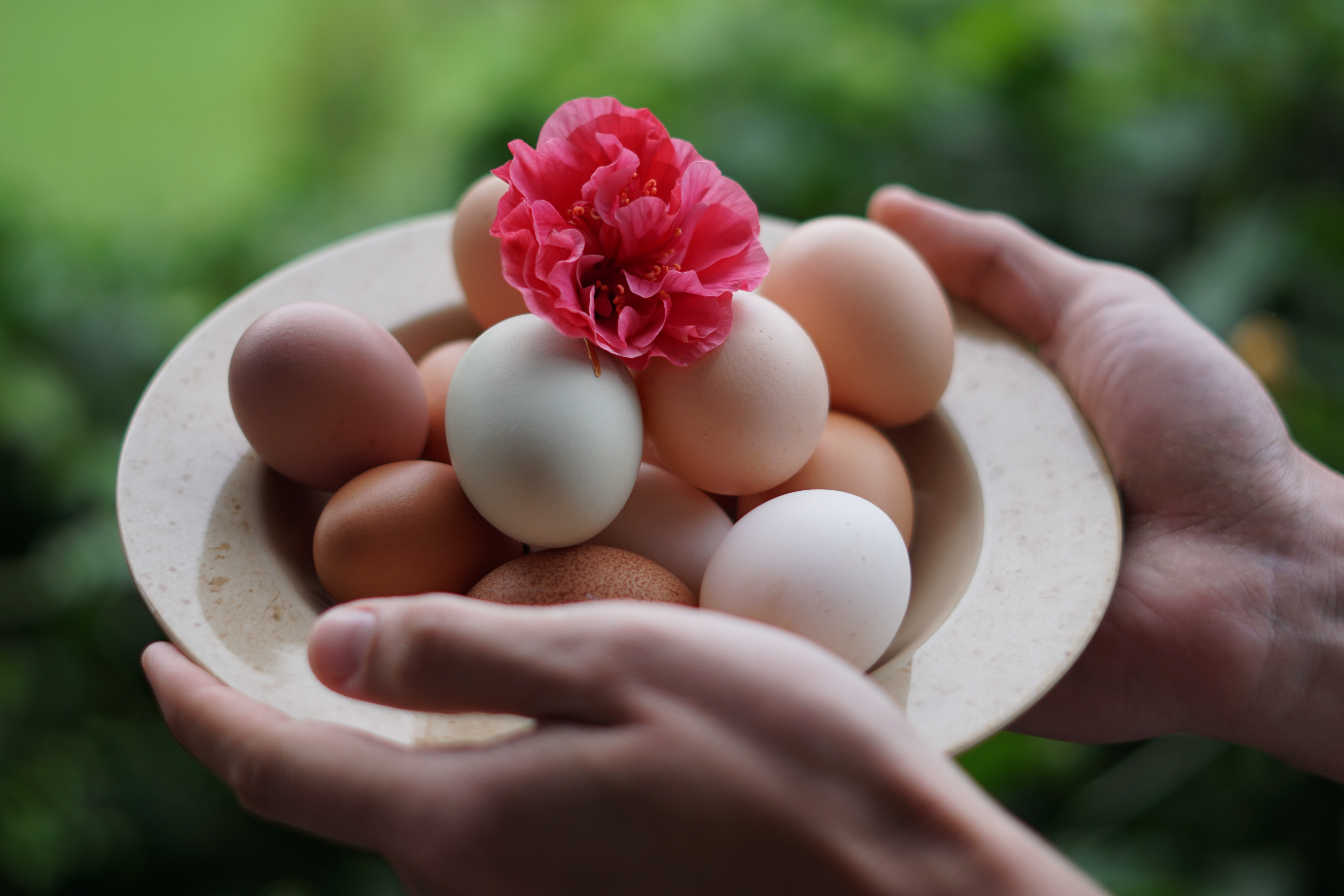 person holding bowl full of eggs