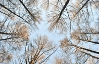 brown bare trees during daytime