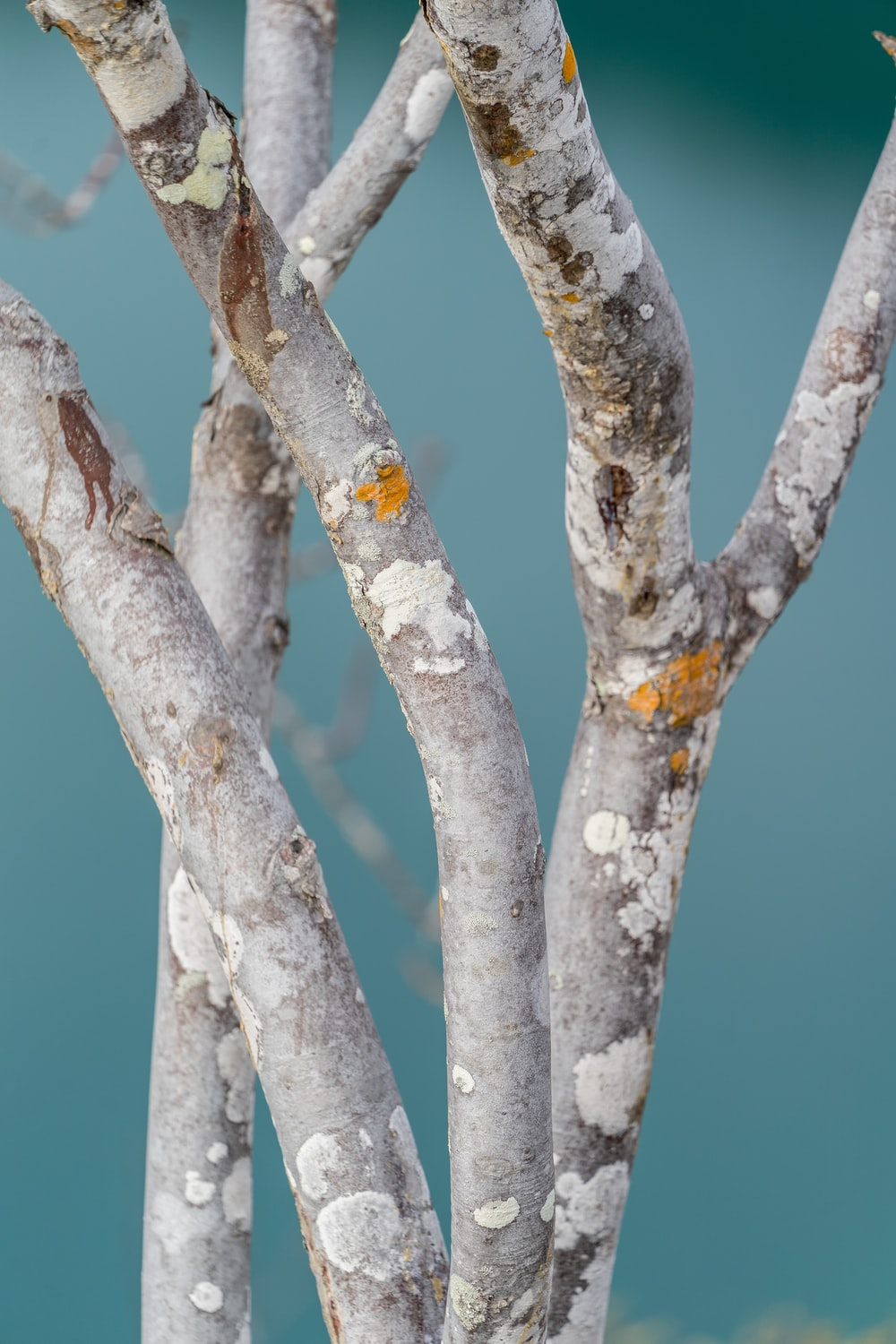 gray tree branches