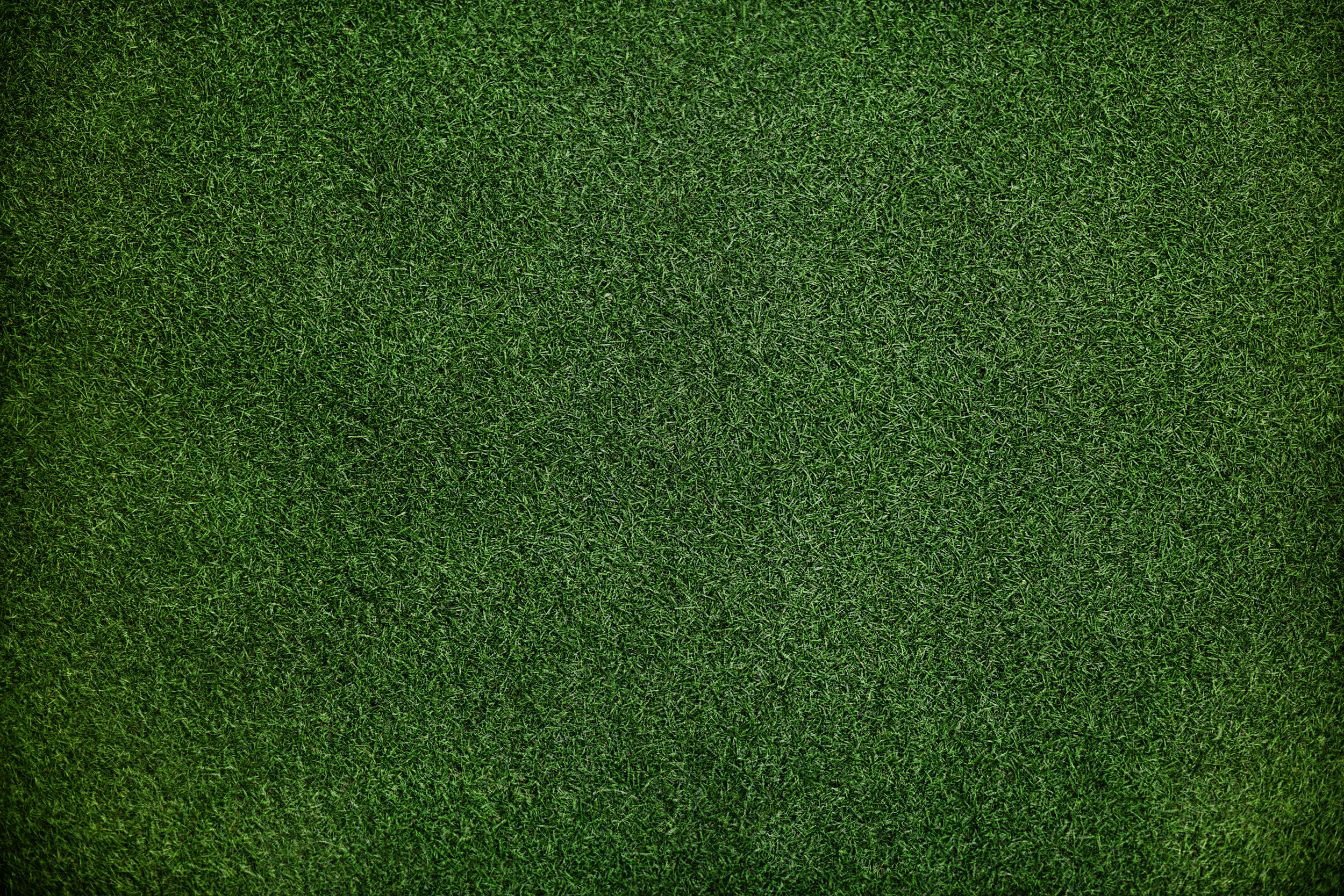grass texture hd. Brilliant Texture Texture Grass Pattern And Field HD Photo By Rawpixel Rawpixel On  Unsplash Intended Grass Texture Hd