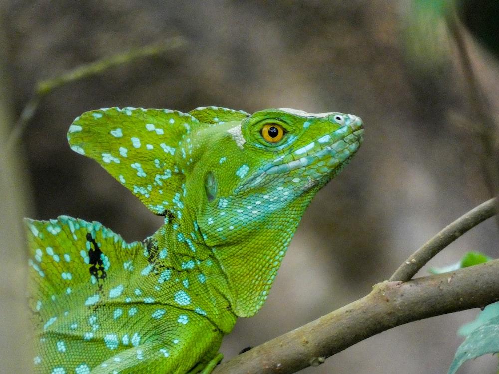 green lizard on tree