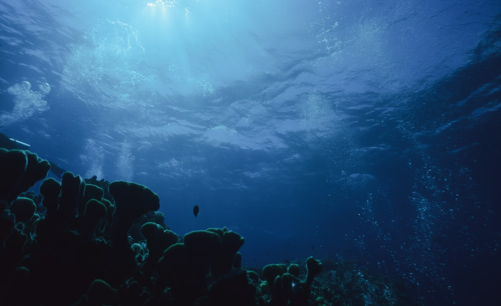 body of water and corals