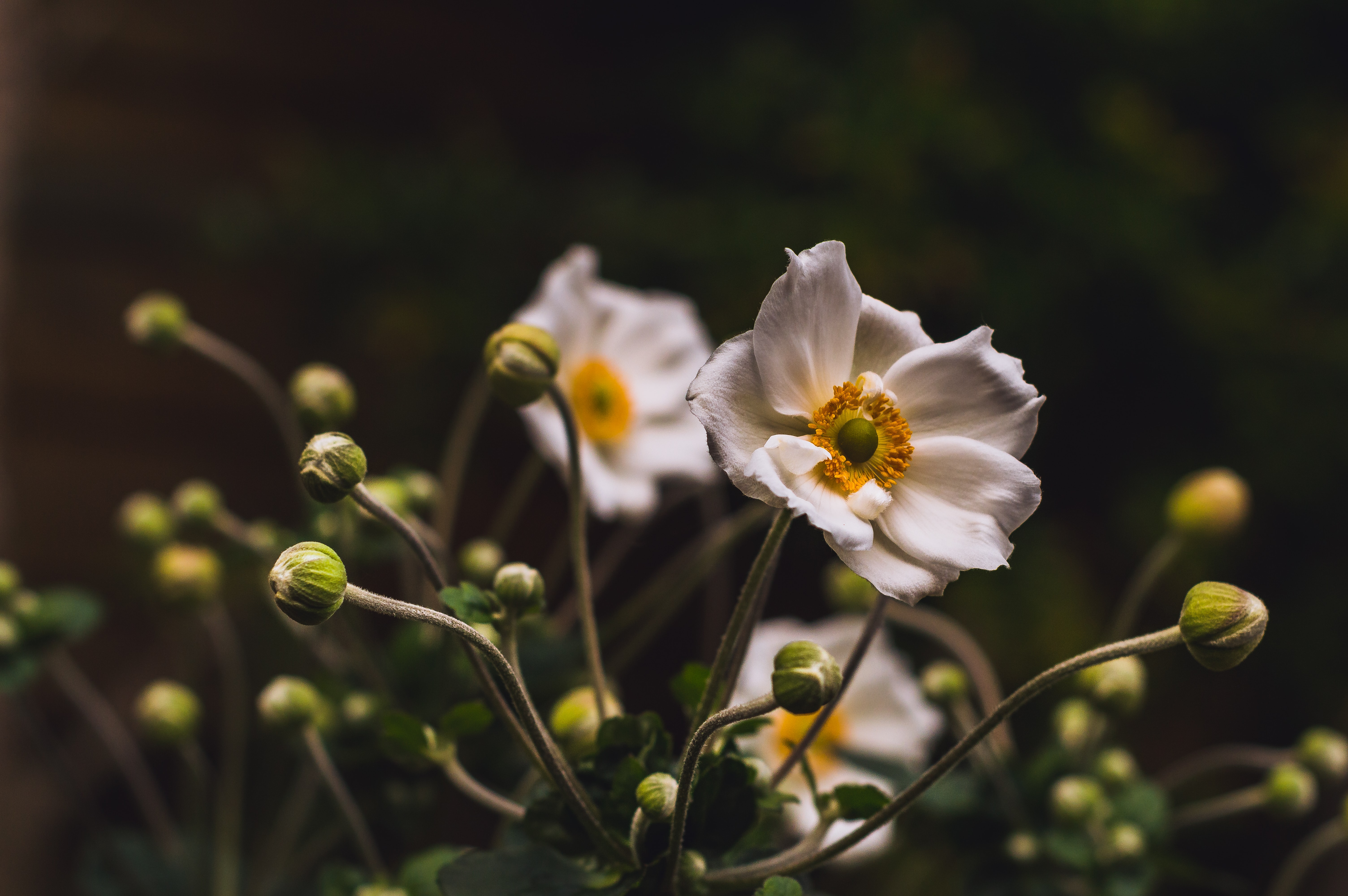 white and yellow petaled flowers