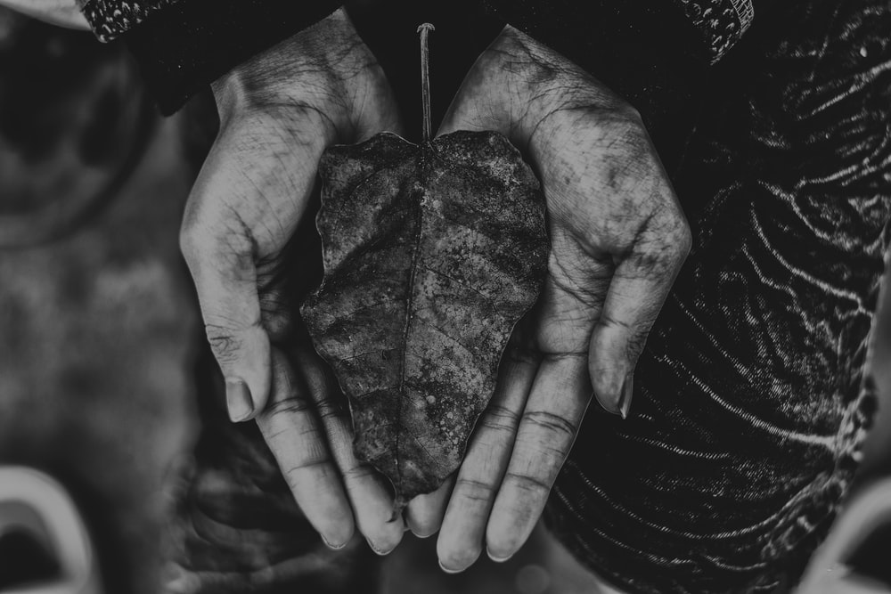 grayscale photo of human palm with leaf