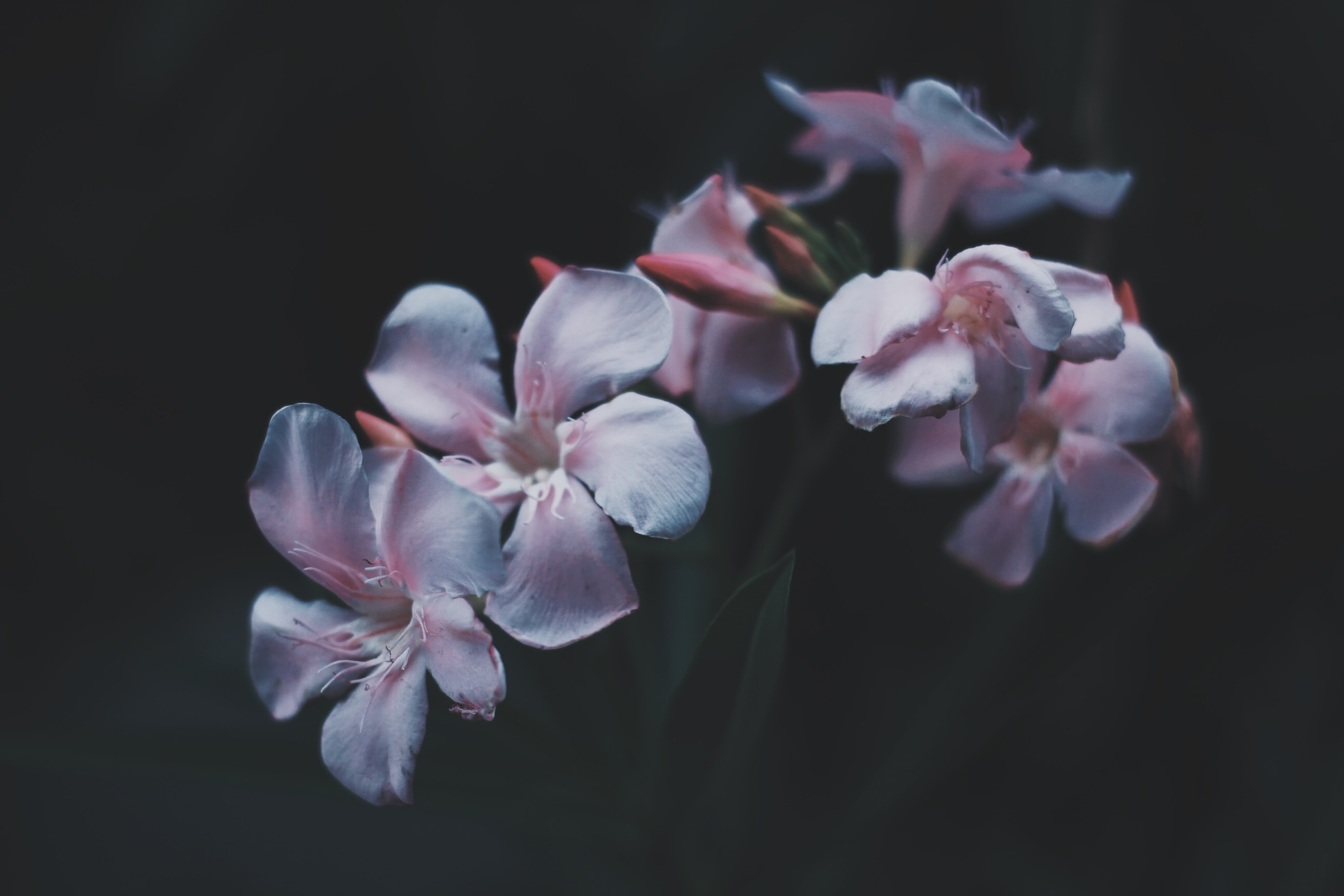 shallow focus photo of flowers