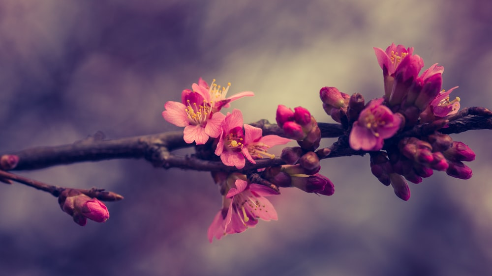 pink flower on brown stel