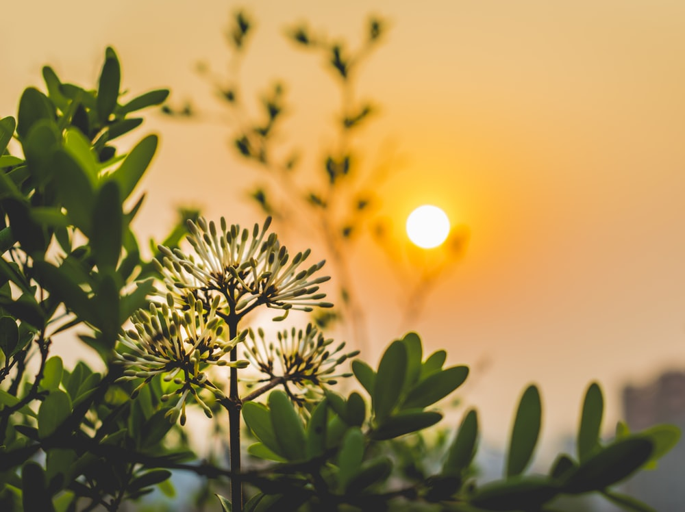 plant shallow focus photography