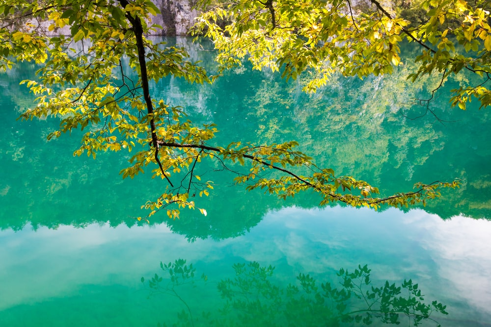 green leafed tree above body of water